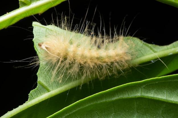Bella macro verme sulla pianta Foto Premium