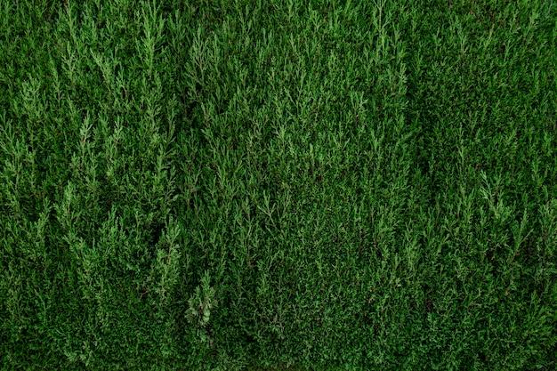 Bella parete verde del fogliame Foto Gratuite