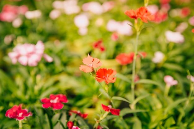 Bella piccola pianta in fiore nel giardino Foto Gratuite