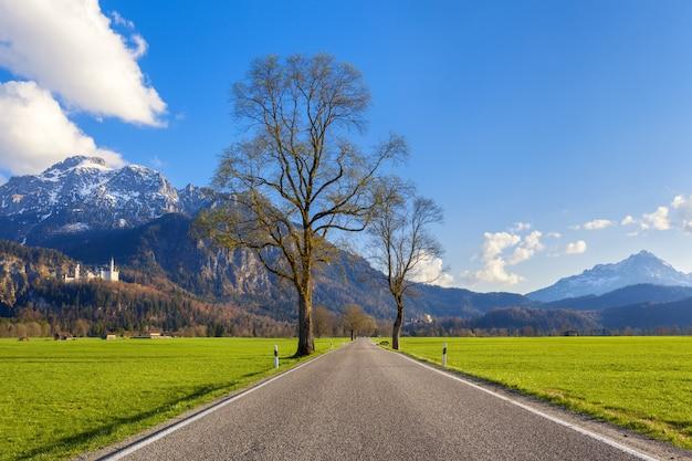 Bella strada rurale con alberi, erba colorata in montagna Foto Premium