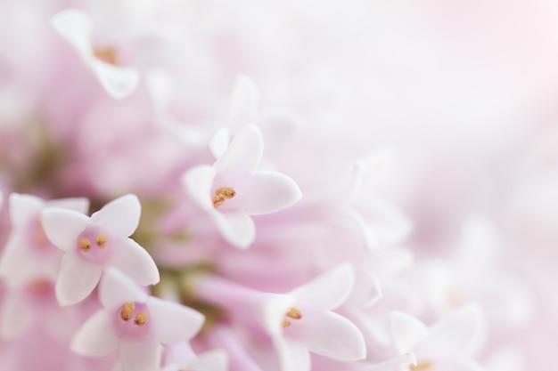 Bella tenera delicato delicato fiore sfondo con i piccoli fiori rosa. orizzontale. spazio di copia. Foto Gratuite