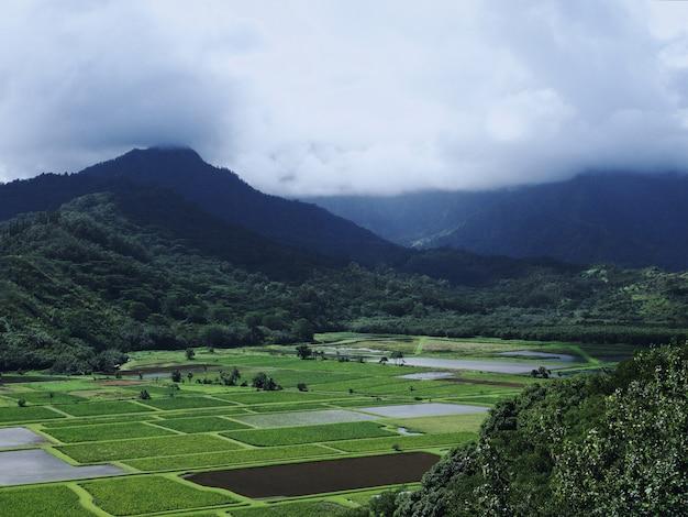 Bella vista sui campi verdi con le magnifiche montagne nebbiose Foto Gratuite