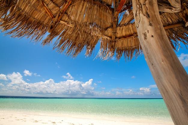 Bella vista tropicale: spiaggia alle maldive Foto Premium