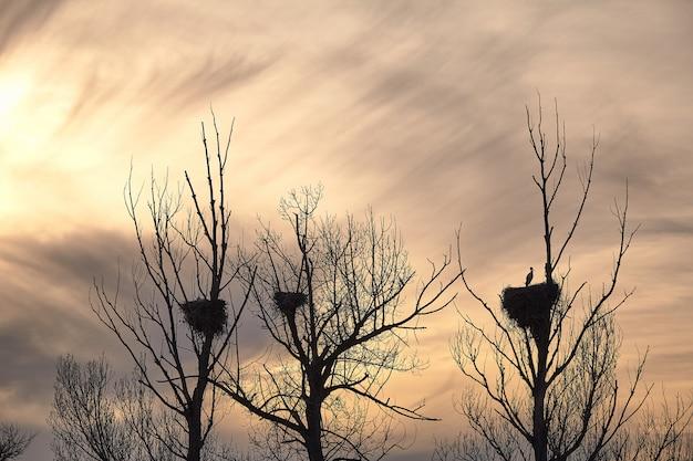 Belle cicogne in un tramonto di primavera nei loro nidi sulla cima di un albero Foto Premium