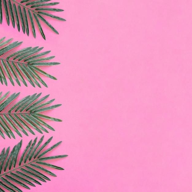 Belle foglie di palma su sfondo rosa con spazio a destra Foto Gratuite