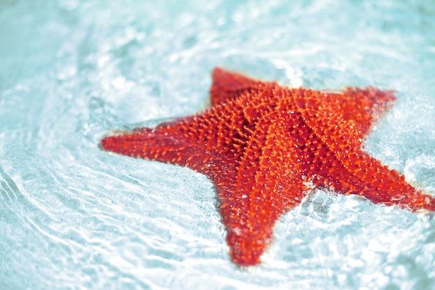 Belle stelle marine rosse luminose variopinte in acqua blu dell'oceano pulita Foto Gratuite