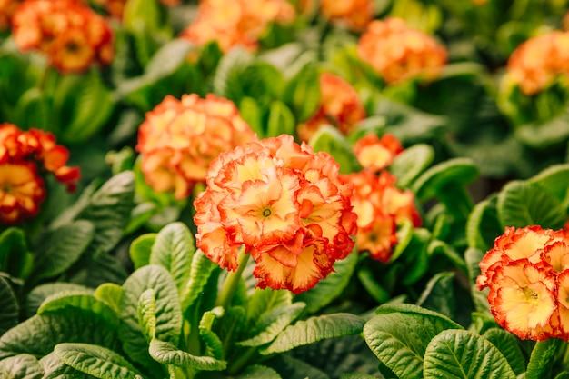 Bellissimi fiori tropicali in fiore Foto Gratuite