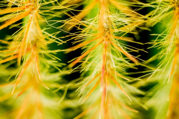 Bellissimi scatti macro di cactus spinoso. sfondo e trame Foto Premium