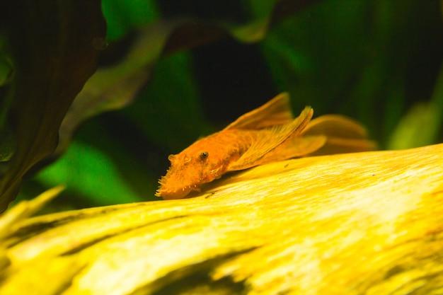 Bellissimo acquario con un'abbondanza di piante e abitanti del mondo sottomarino. Foto Premium