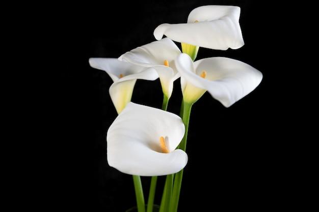 Bellissimo bouquet di calle bianche su orientamento orizzontale nero Foto Premium
