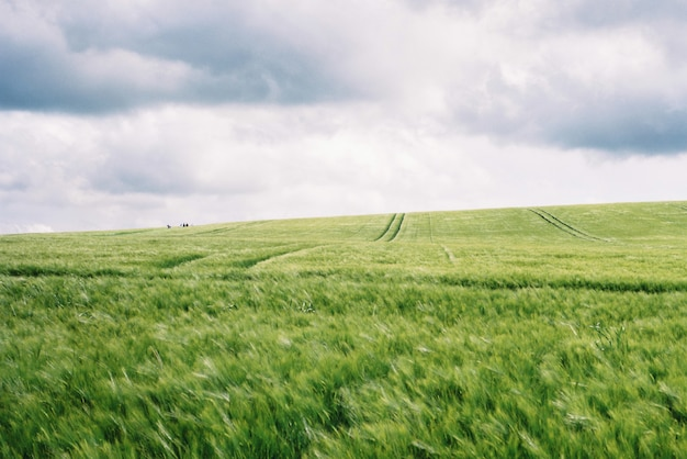Bellissimo campo verde con incredibile cielo bianco nuvoloso Foto Gratuite