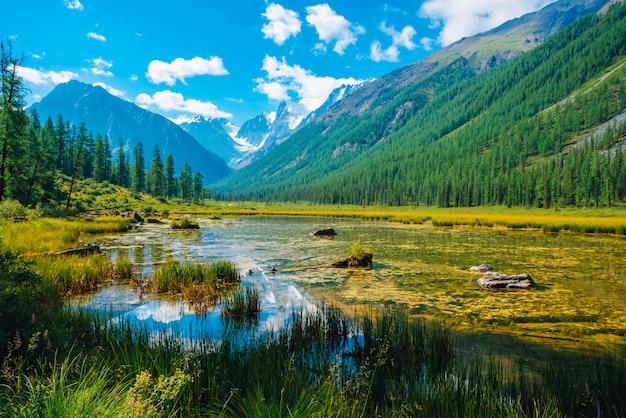 Bellissimo ghiacciaio riflesso nell'acqua pura di montagna con piante sul fondo. Foto Premium