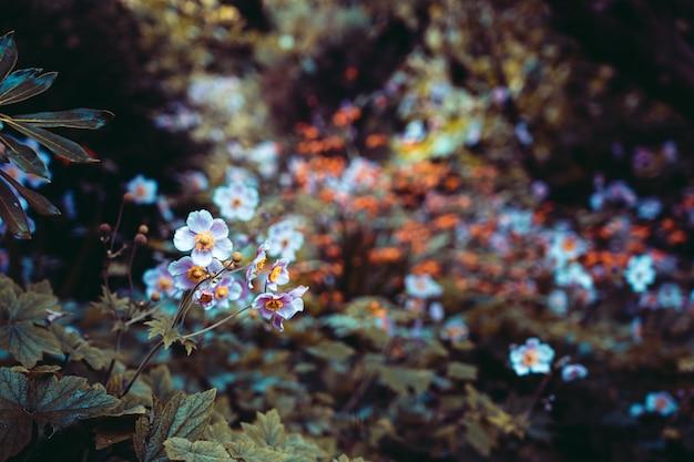 Bellissimo giardino con fiori, effetto grunge Foto Premium
