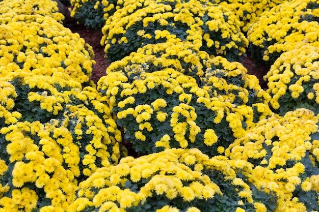 Bellissimo giardino di fiori in fiore Foto Premium