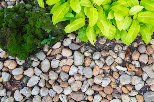 Bellissimo giardino roccioso. ornamentale verde e pietra ricoperta di muschio verde. Foto Premium