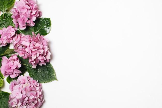 Bellissimo lilla con foglie verdi Foto Gratuite