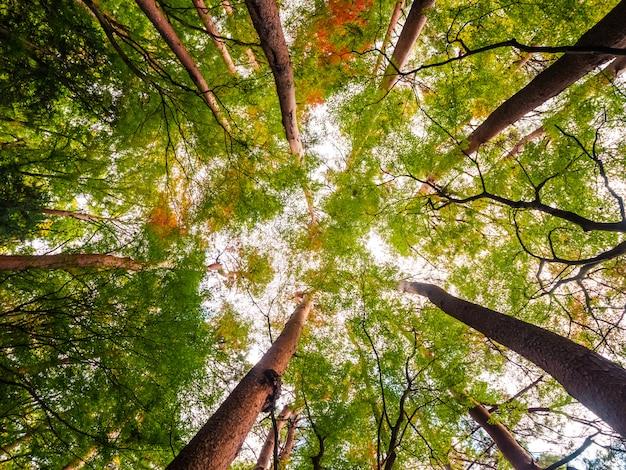 Bellissimo paesaggio di grande albero nella foresta con vista angeli bassi Foto Gratuite