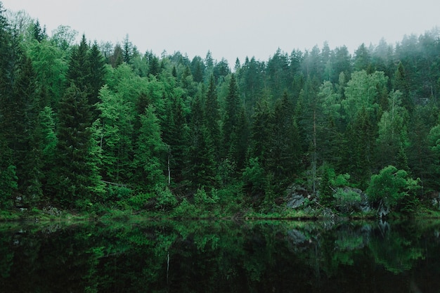 Bellissimo paesaggio di una foresta verde Foto Gratuite