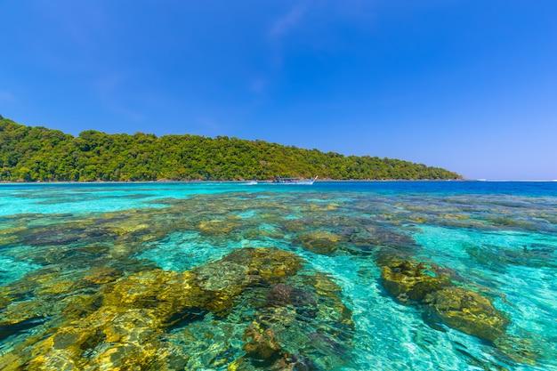 Bellissimo paesaggio e acqua cristallina all'isola di similan, mare delle andamane, phuket, thailandia Foto Premium