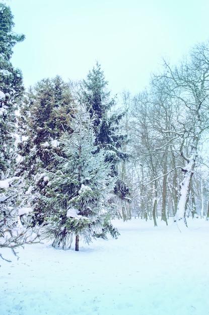 Bellissimo parco in inverno Foto Premium