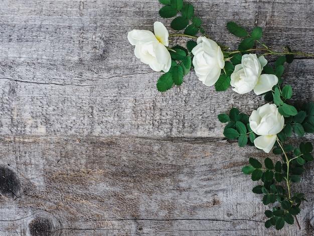 Bellissimo ramo di rosa canina con fiori bianchi Foto Premium