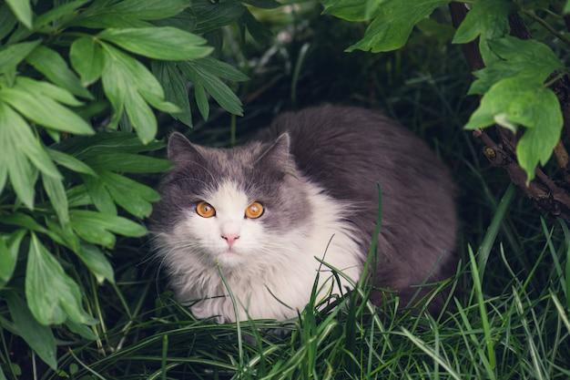 Bellissimo ritratto di gatto con gli occhi gialli Foto Premium