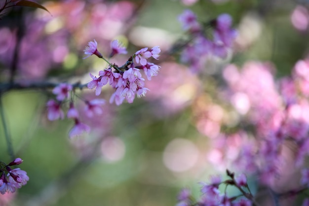 Bellissimo sfondo di fiori rosa Foto Gratuite