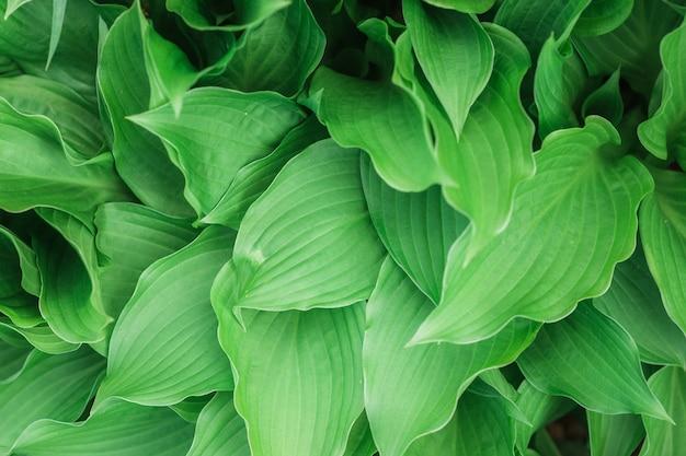 Bellissimo sfondo o carta da parati naturale a foglia verde - perfetto per articoli / post sulla natura Foto Gratuite