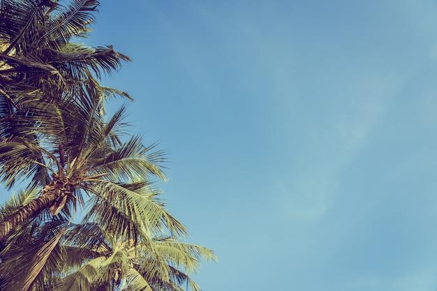 Bello albero del cocco del angolo basso con il fondo del cielo blu Foto Gratuite