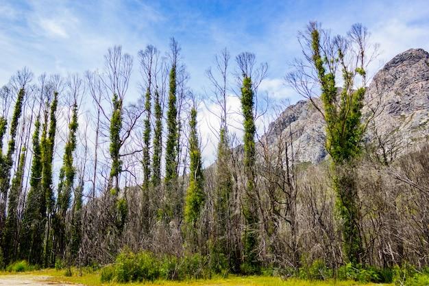 Bello colpo degli alberi che crescono accanto alle formazioni rocciose nelle montagne un giorno soleggiato Foto Gratuite