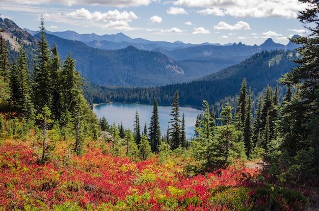 Bello colpo dei fiori rossi vicino agli alberi verdi con le montagne boscose nella distanza Foto Gratuite