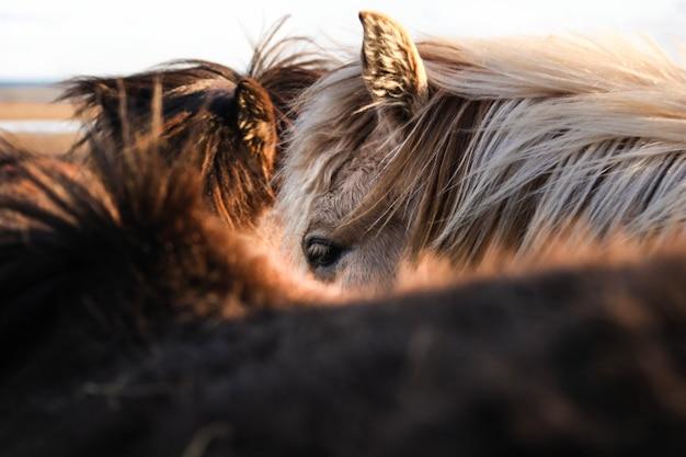 Bello colpo del primo piano dei cavalli marroni e bianchi Foto Gratuite