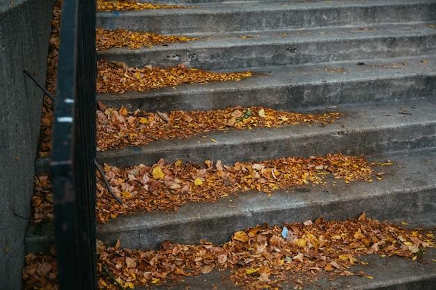 Bello colpo delle foglie di autunno variopinte cadute sulle scale Foto Gratuite