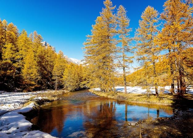 Bello colpo di un piccolo fiume che attraversa una foresta nevosa con i pini durante il giorno Foto Gratuite