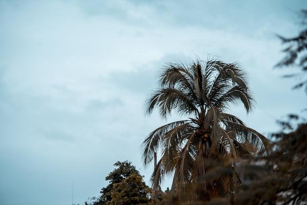 Bello colpo di una palma con un cielo nuvoloso nei precedenti Foto Gratuite