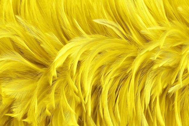 Bello fondo giallo dorato di struttura della superficie delle piume di uccello. Foto Premium