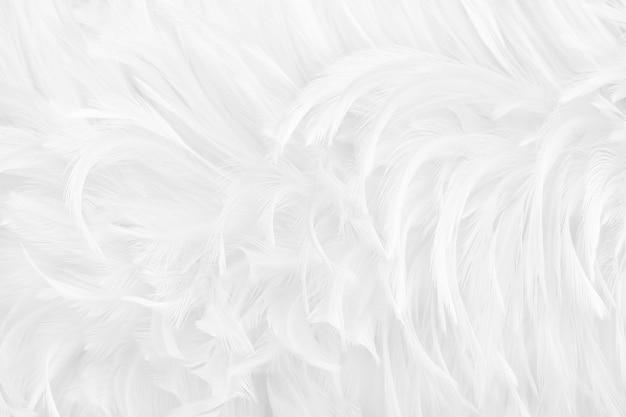 Bello fondo grigio bianco di struttura della superficie delle piume di uccello. Foto Premium