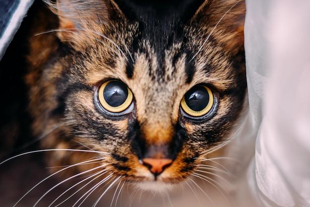 Bello Giovane Gatto Con I Grandi Occhi Spaventati Che Guarda L