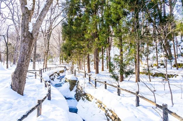 Bello paesaggio all'aperto della natura con l'albero nella stagione invernale della neve a hokkaido Foto Gratuite