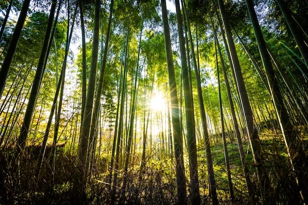 Bello paesaggio del boschetto di bambù nella foresta a arashiyama kyoto Foto Gratuite