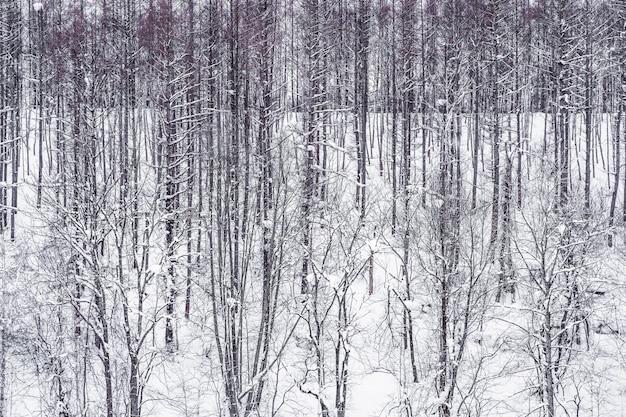 Bello paesaggio del gruppo del ramo di albero nell'inverno della neve Foto Gratuite