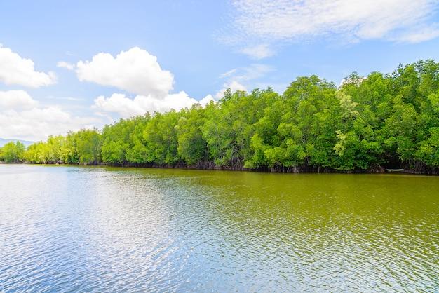 Bello paesaggio della foresta della mangrovia in tailandia Foto Gratuite