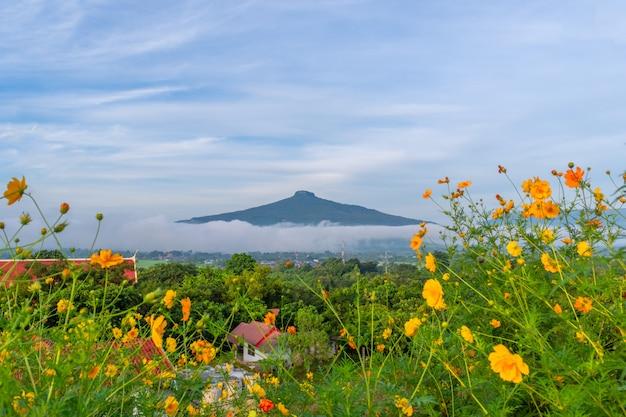 Bello paesaggio naturale per il rilassamento in phu luang, provincia di loei tailandia Foto Premium