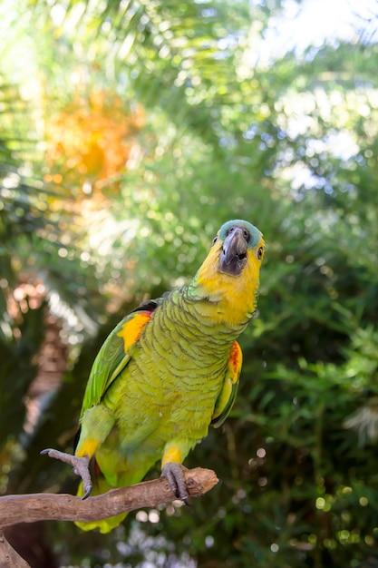 Bello pappagallo verde di amazon fra i rami verdi delle palme Foto Premium