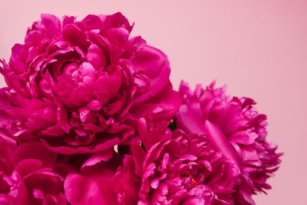 Bello primo piano rosa del mazzo della peonia sul rosa. vista dall'alto. disteso Foto Premium