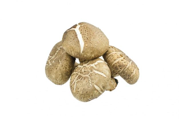 Bianco di isolatedon del fungo di shiitake Foto Premium