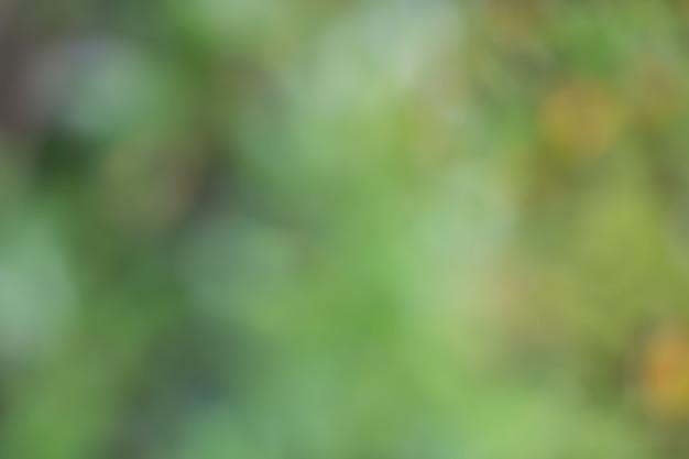 Bokeh delle foglie dell'albero per il fondo della natura e risparmi il verde Foto Premium