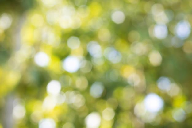 Bokeh delle foglie dell'albero per il fondo della natura Foto Premium