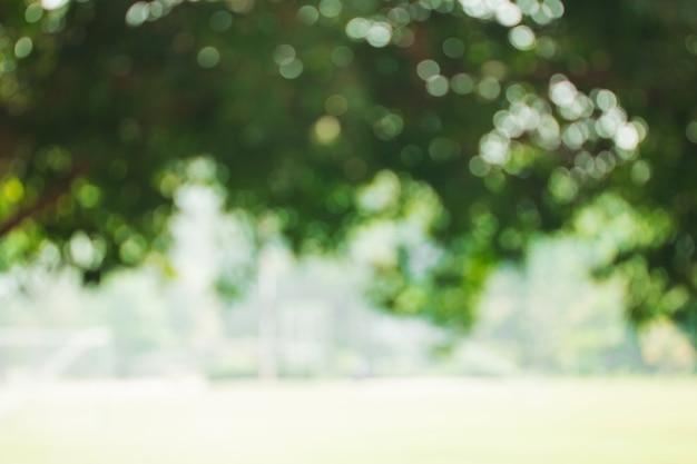 Bokeh delle foglie dell'albero per la priorità bassa della natura Foto Premium