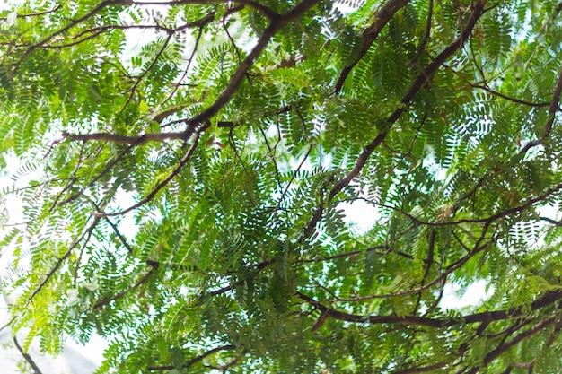 Bokeh verde della natura e fondo di struttura dell'estratto del ramo della foglia della sfuocatura Foto Premium